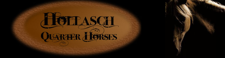 Hollasch Quarter Horses